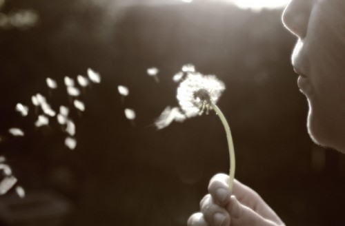 simple pleasures blowing dandelions