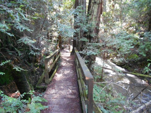 muir woods bridge