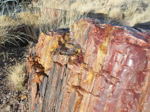 petrified wood forest national park