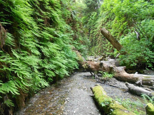Fern Canyon Redwood national park