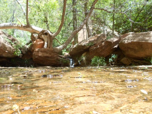 Lower emerald pool Zion