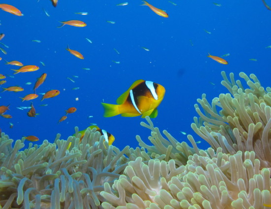 Marine fish are leaving the tropics due to rising sea temperatures