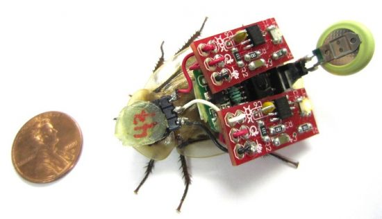 Cyborg roboroaches could help rescue people in a disaster