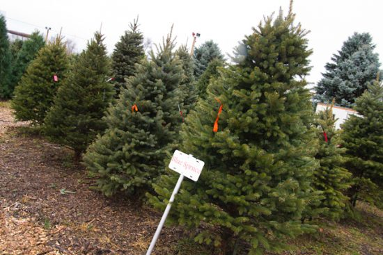 Fourth Graders Free Christmas Tree