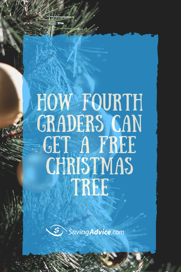 free christmas tree, how to get a free christmas tree, where to get a free christmas tree