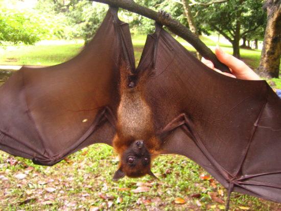 bat bite rabies victim