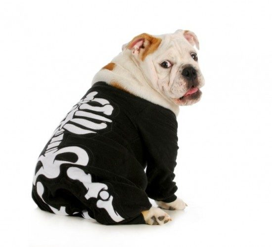 DIY halloween pet costumes