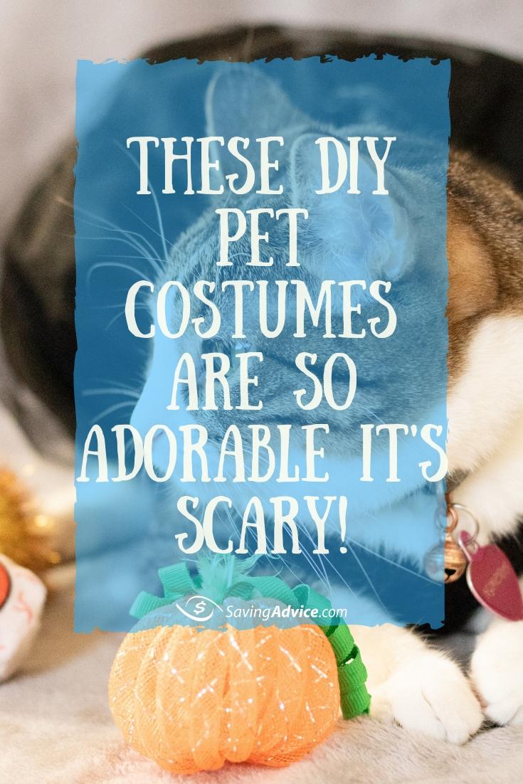 diy halloween pet costumes, affordable pet costumes, cheap halloween costumes for pets
