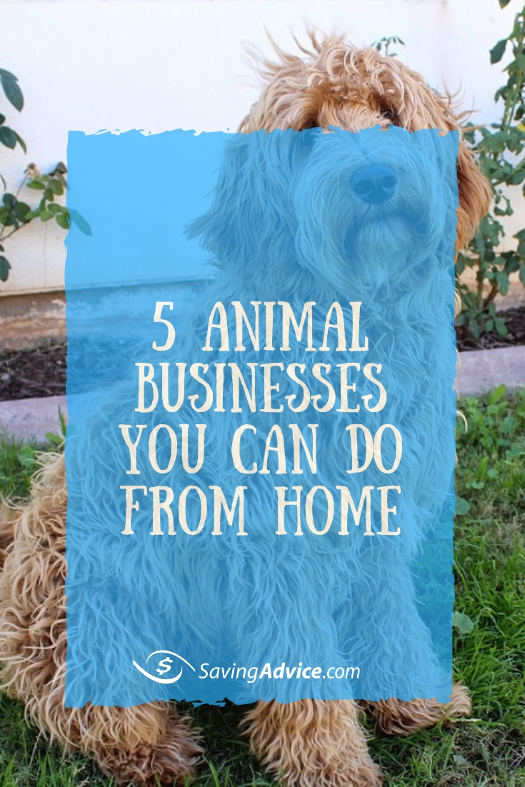 animal business ideas